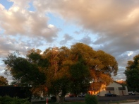Beautiful light (and birdsong) show as we returned to our motel after dinner. Night night.