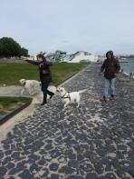 by the Sado, dog encounter